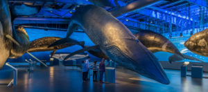 4_ISLANDIA360-Ballenas-Islandia-WhalesofIceland